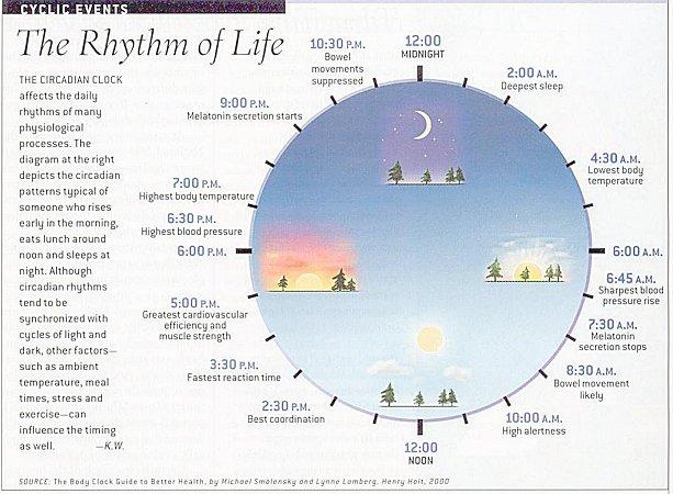 Natural Rhythm Fall