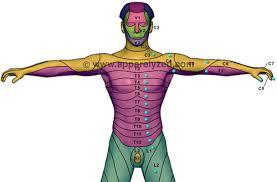 dermatones